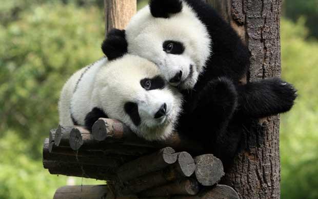 bears-hugging