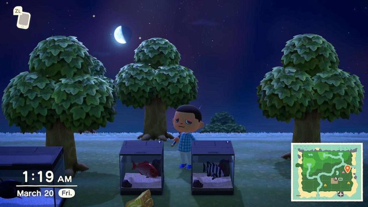 Animal-Crossing-New-Horizons-Where-to-Store-Items