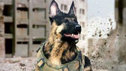 riley german shepherd dog cod call of duty modern warfare ghosts warzone