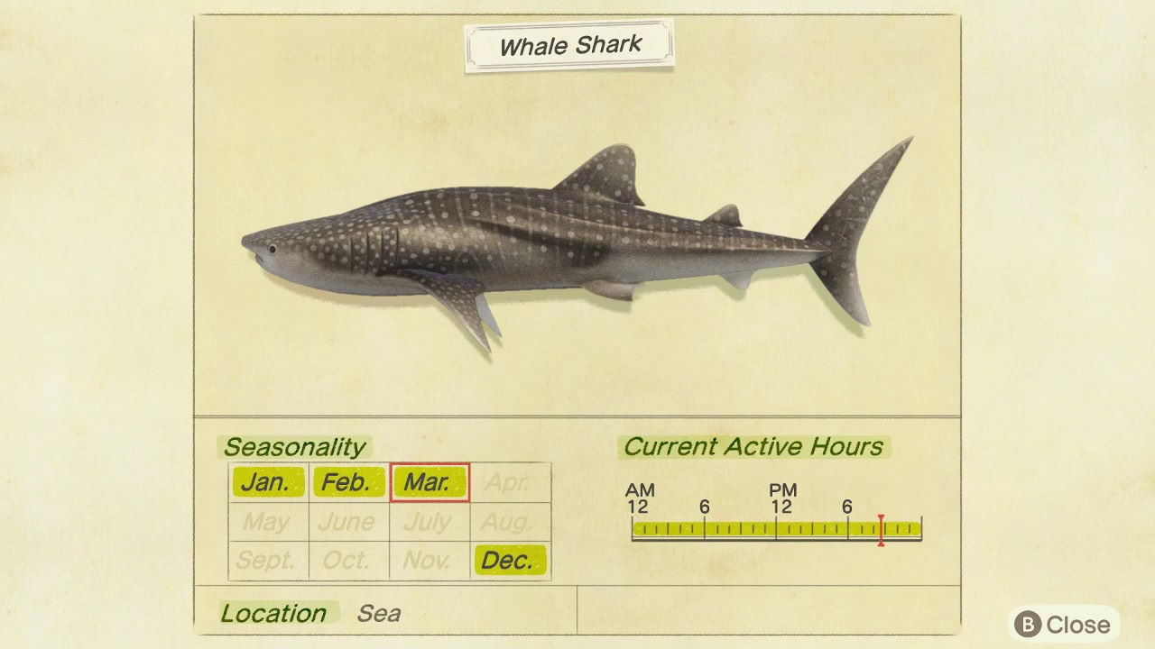 Animal-Crossing-New-Horizons-–-How-to-Catch-Whale-Sharks