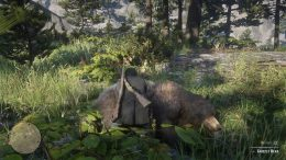 Red Dead Online Grizzly Bear
